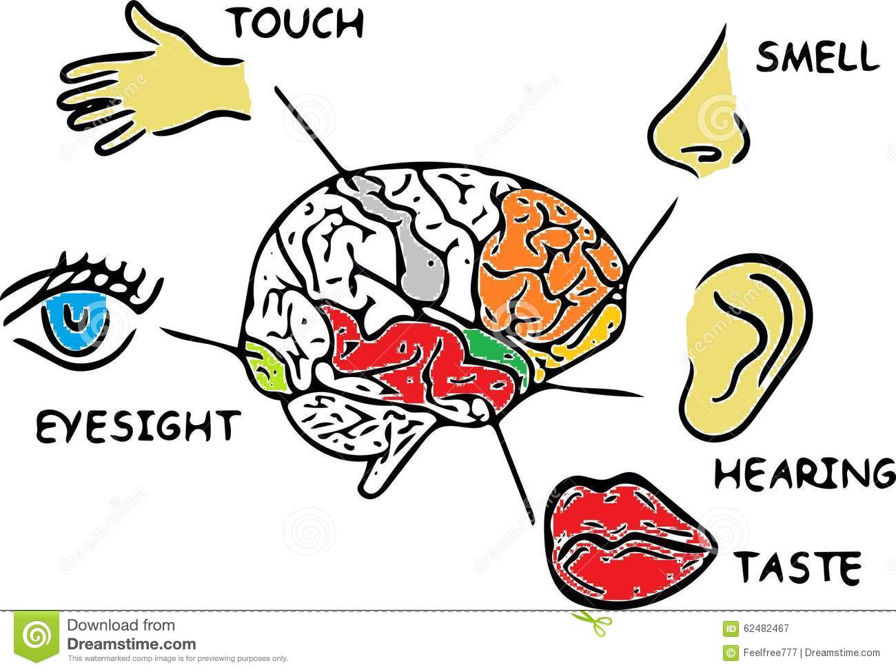 Human Senses Stock Illustration