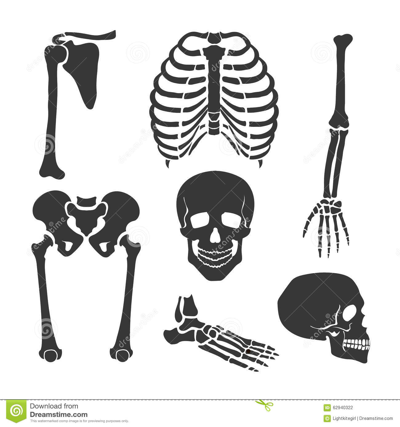 Human Skeleton Vector Black Illustration Set Stock Vector