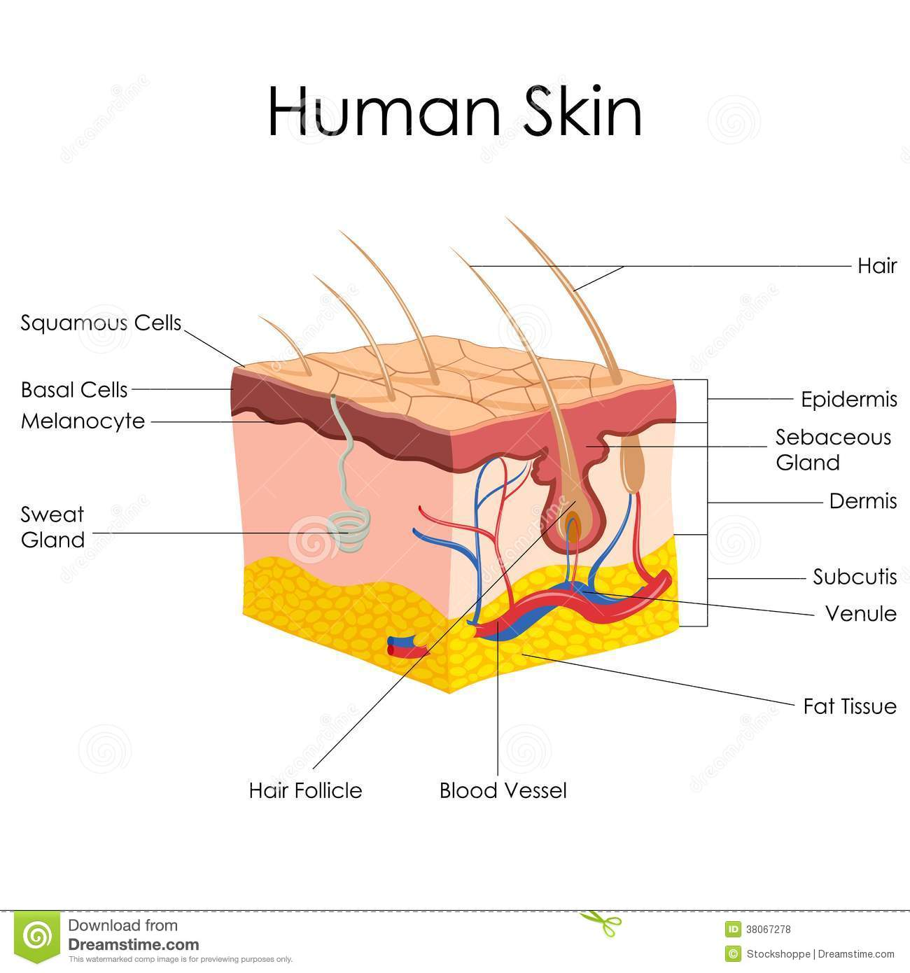 The Structure Of Human Ear Worksheet