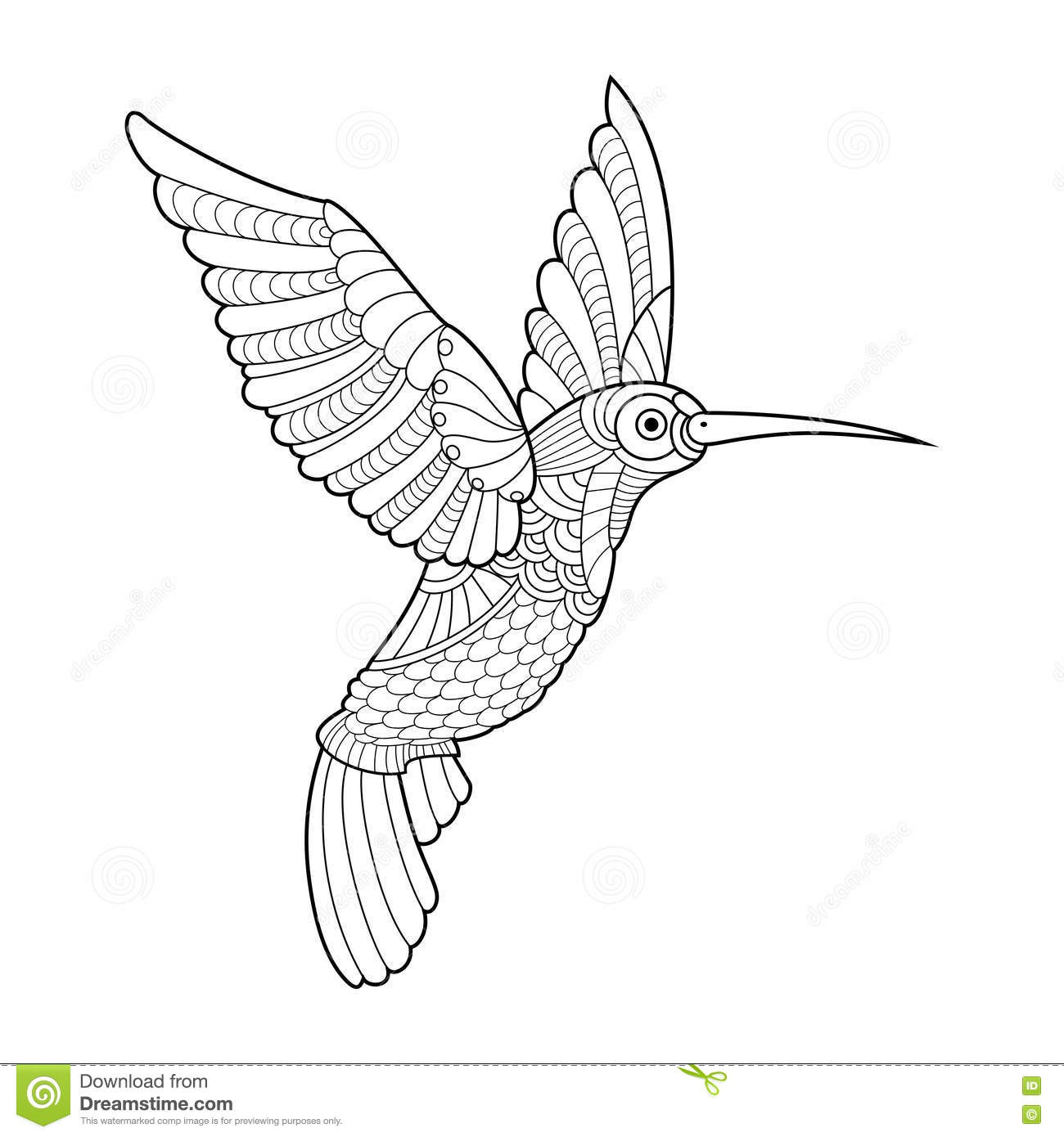 Hummingbird Coloring Book For Adults Vector Stock Vector