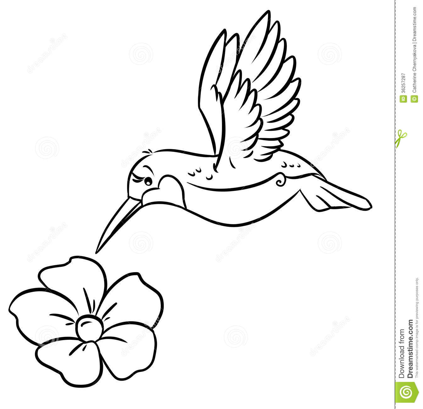 Hummingbird And Flower Coloring Pages Stock Illustration