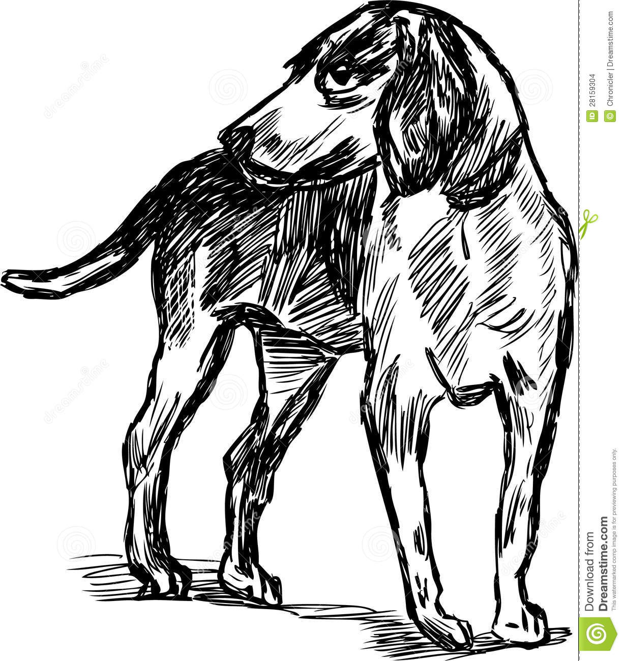 Hunting Dog Stock Vector Illustration Of Isolated