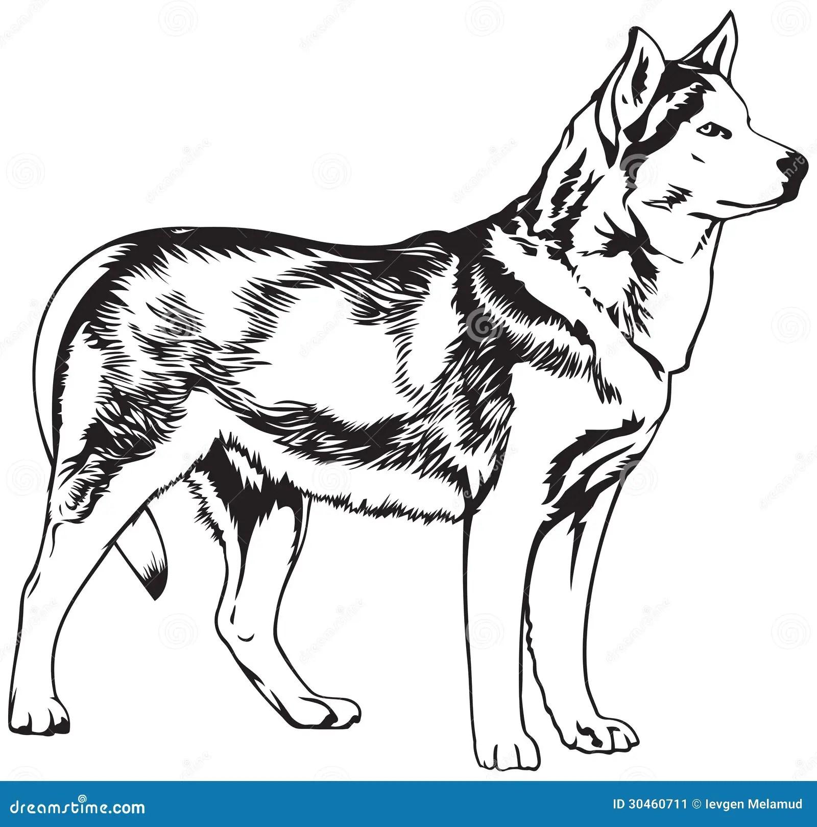 Husky Dog Breed Vector Illustration Stock Vector
