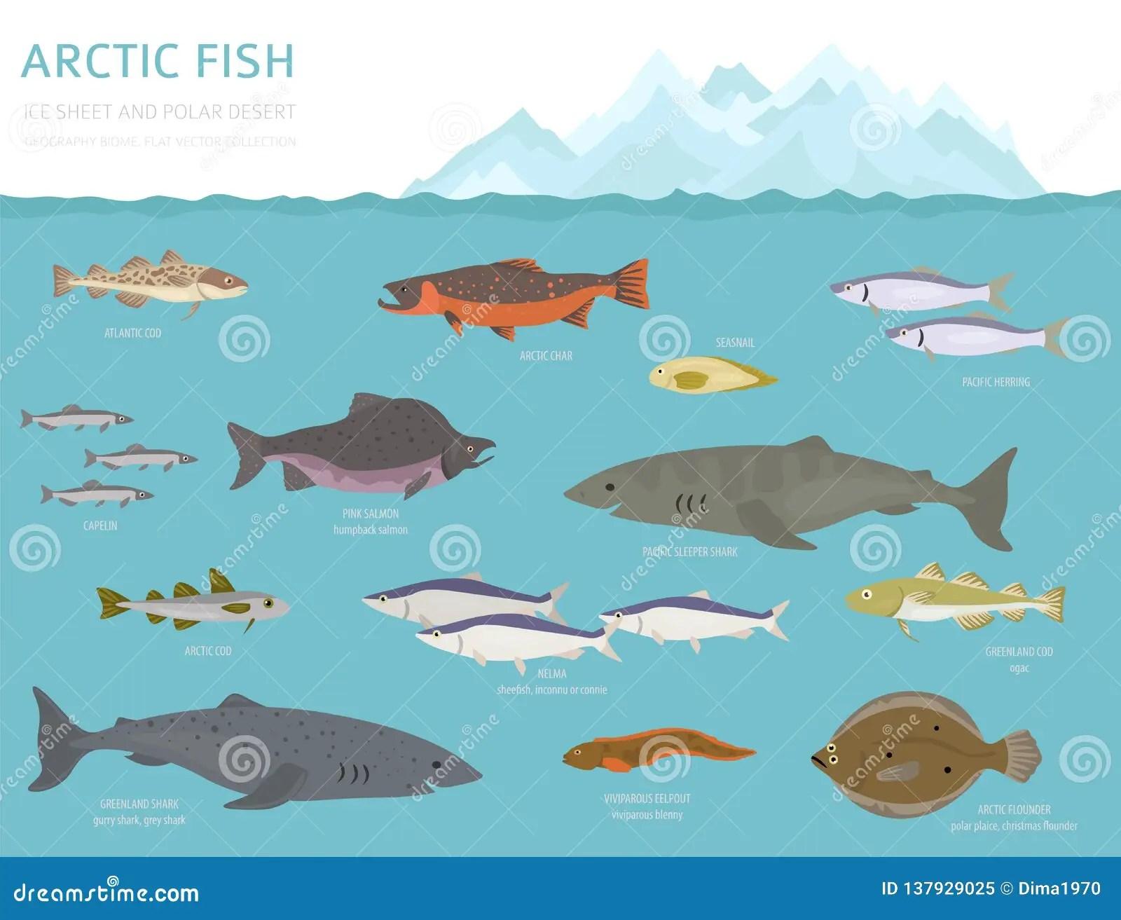 Ice Sheet And Polar Desert Biome Terrestrial Ecosystem