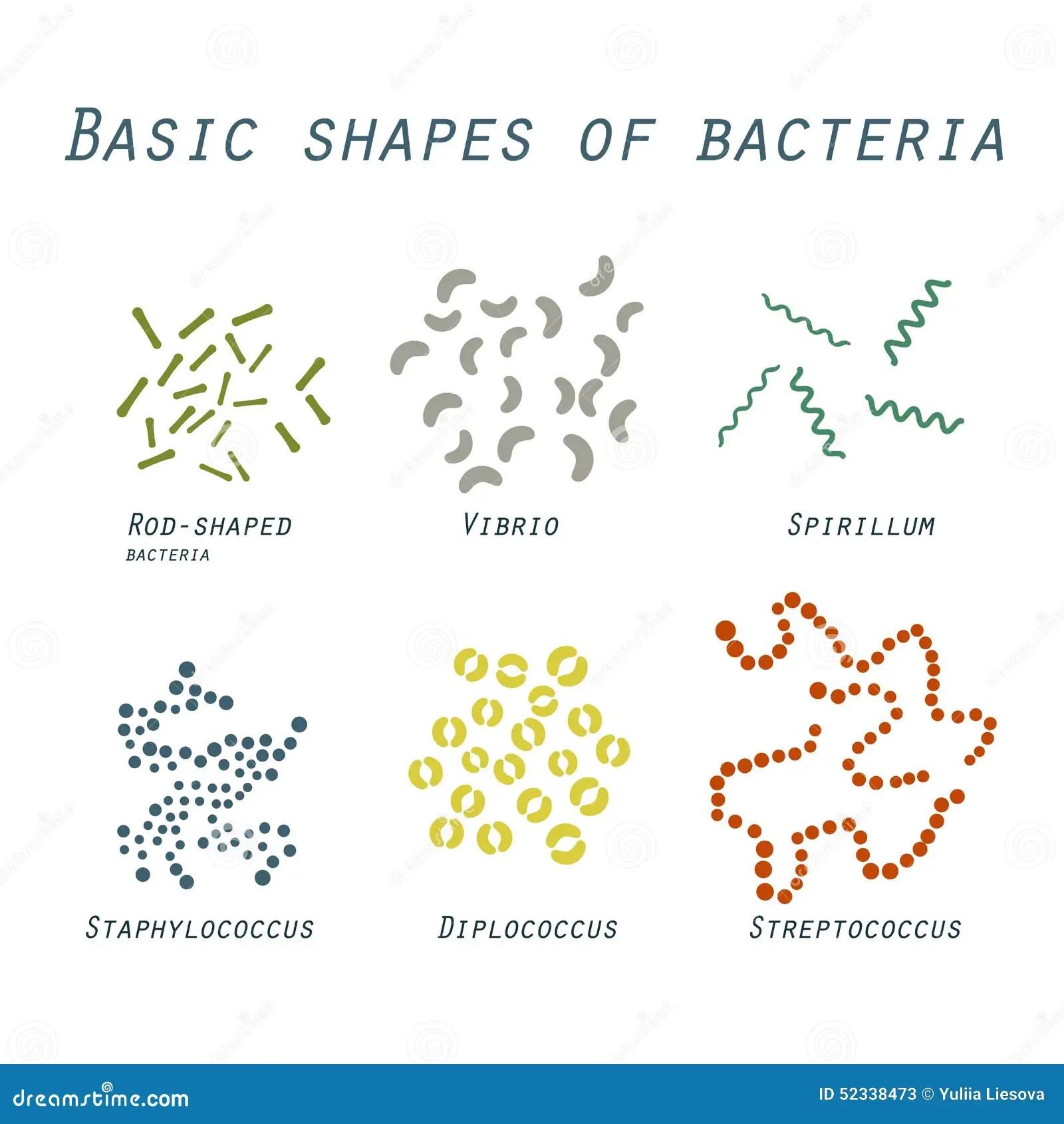 Illustration Av Grundlaggande Former Av Bakterier I Plan