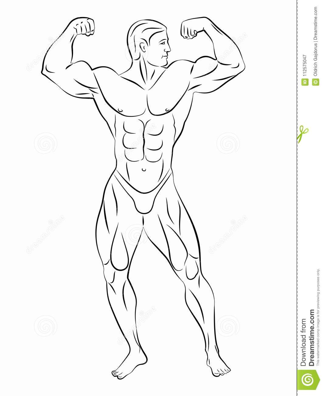 Bodybuilder Drawing
