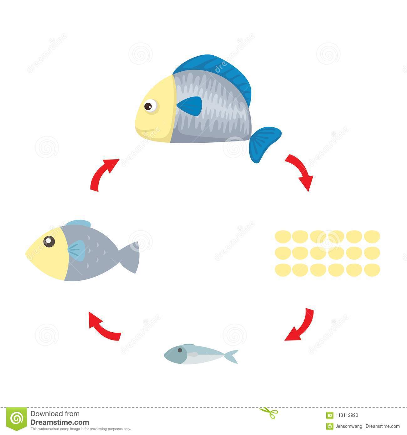 Illustration Life Cycle Fish Stock Vector
