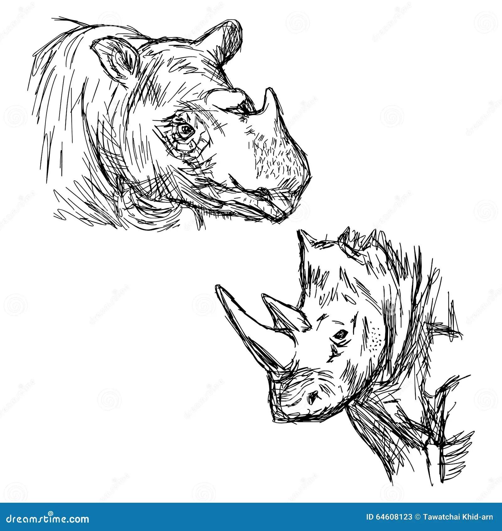 Illustration Vector Hand Drawn Doodle Closeup Rhinoceros