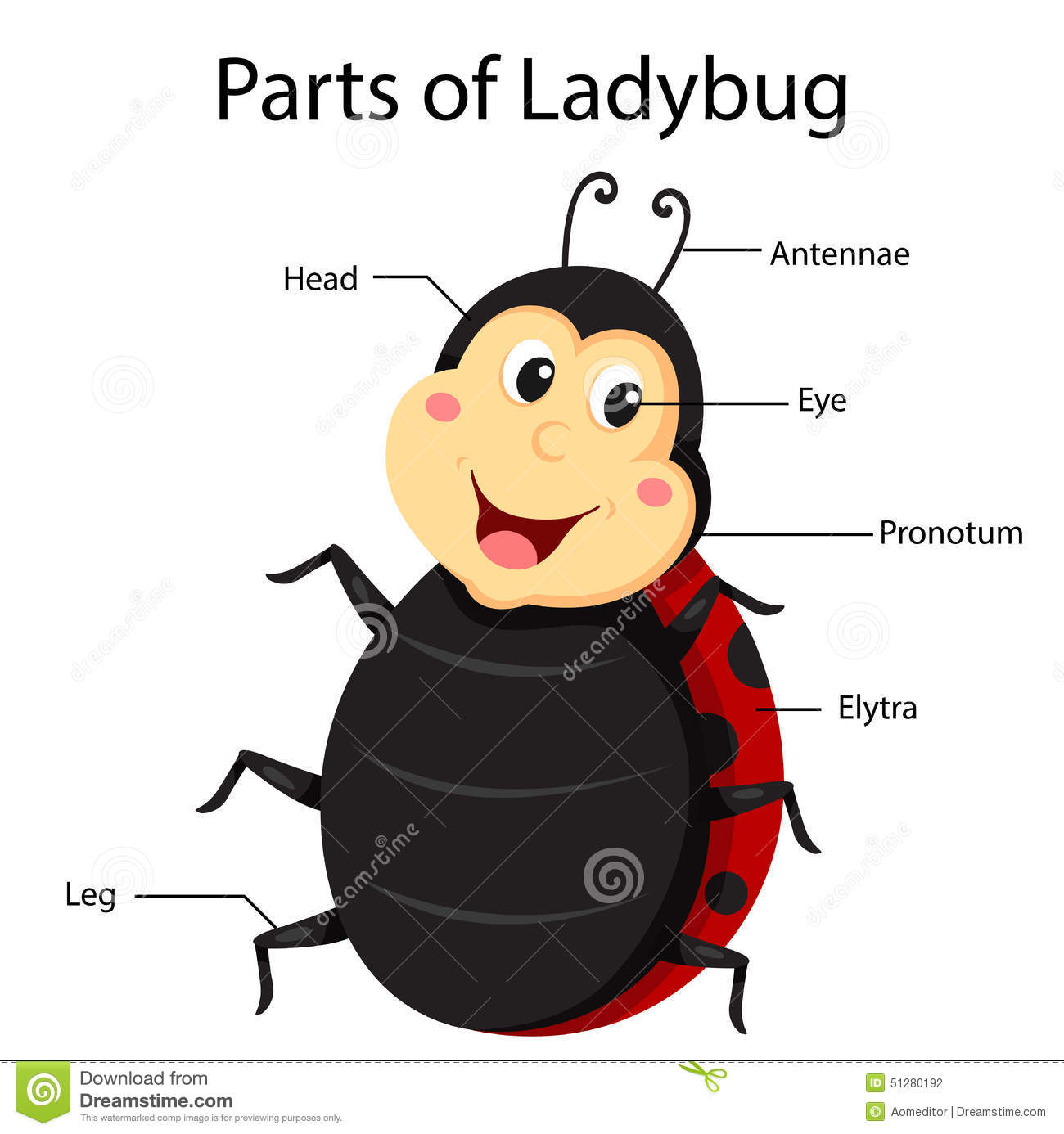 Illustrator Parts Of Ladybug Stock Photo