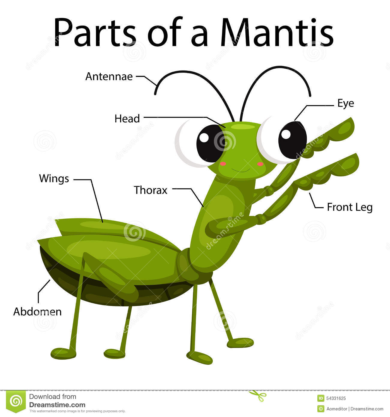 Illustrator Parts Of A Mantis Stock Vector