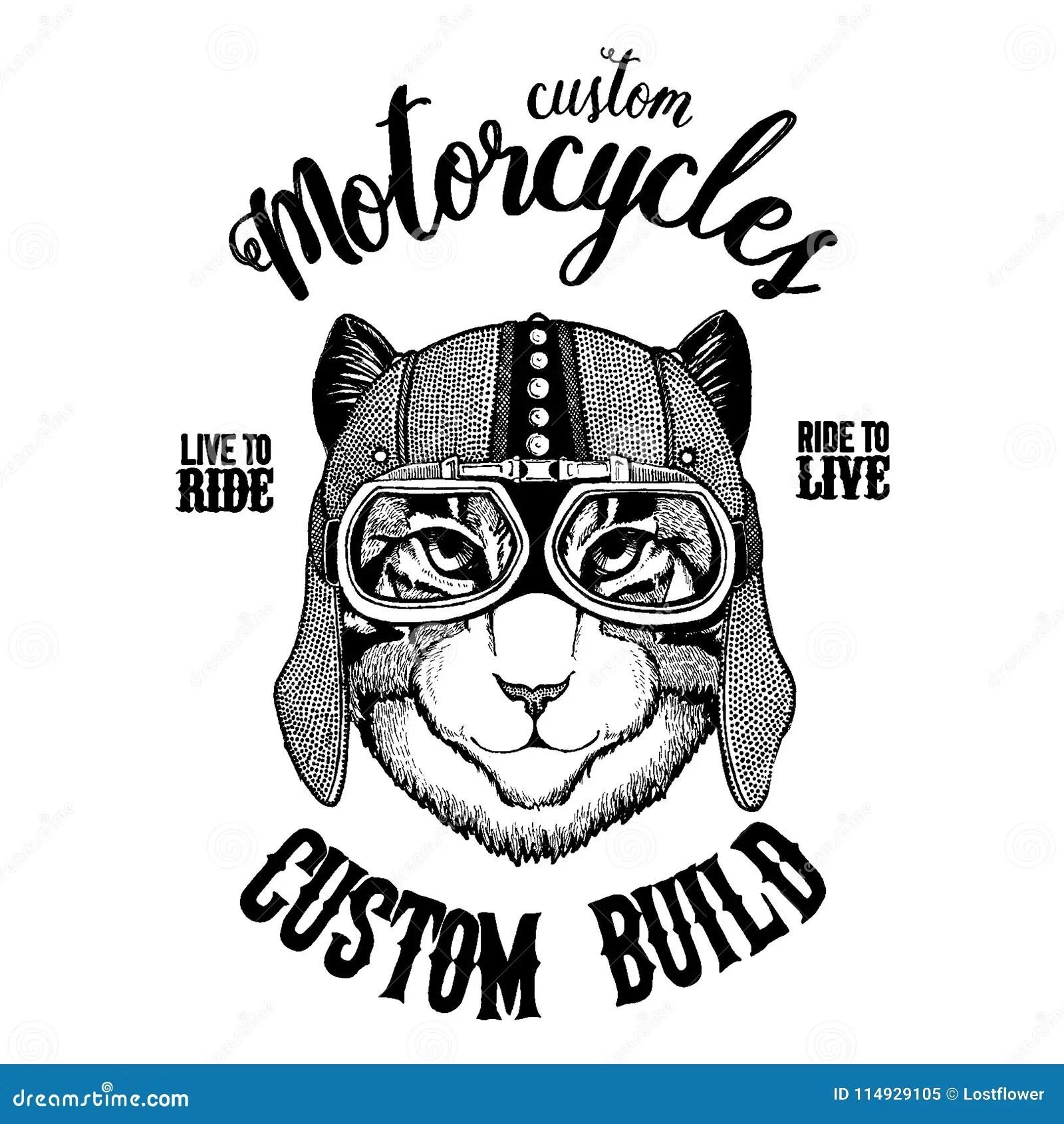 Image Of Domestic Cat Biker Motorcycle Animal Hand Drawn