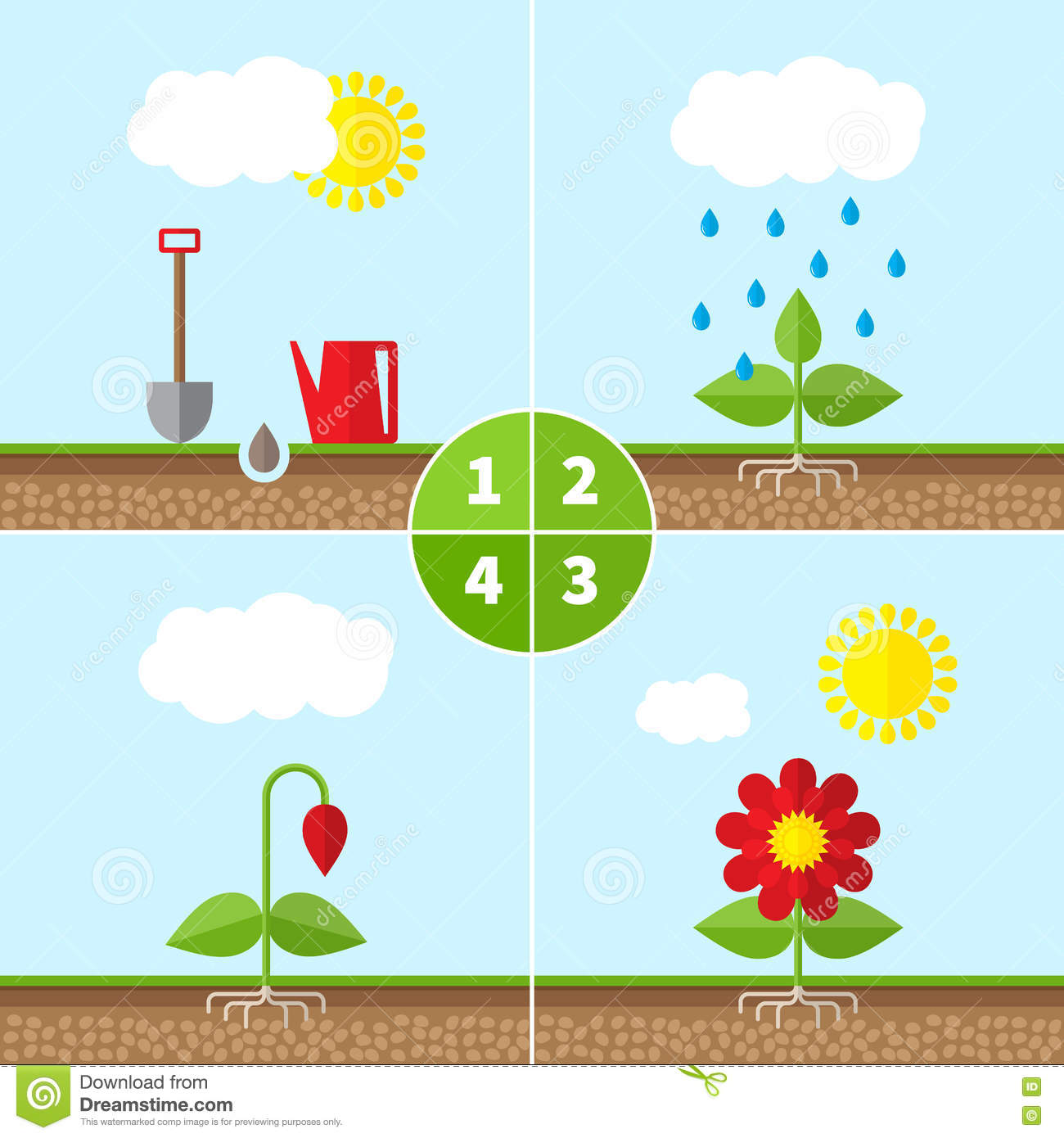 Infographic Four Stages Of Plant Growth Stock Illustration