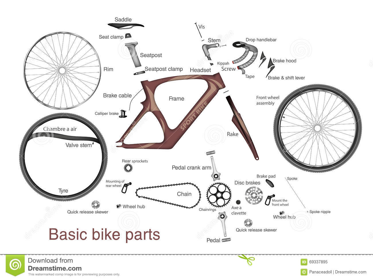 Infographic Of Main Bike Parts With The Names Stock Vector