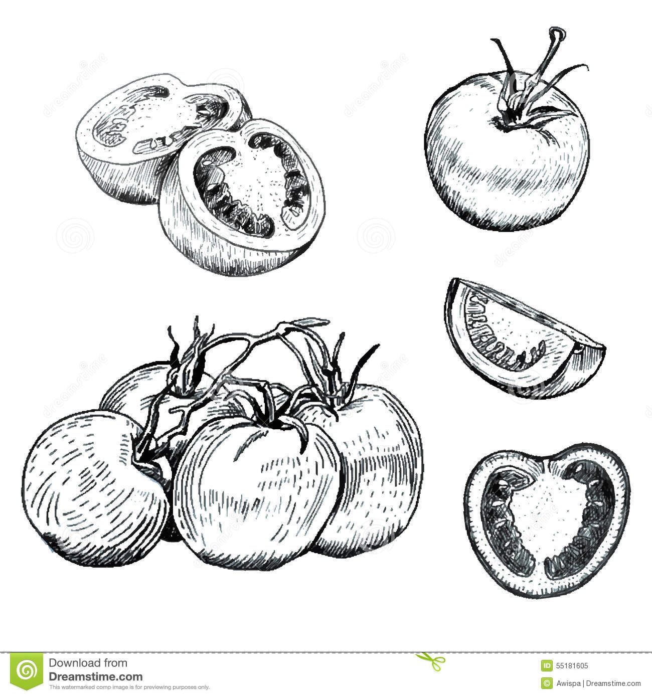 Ink Tomatoes Sketches Set Stock Vector Image Of Health