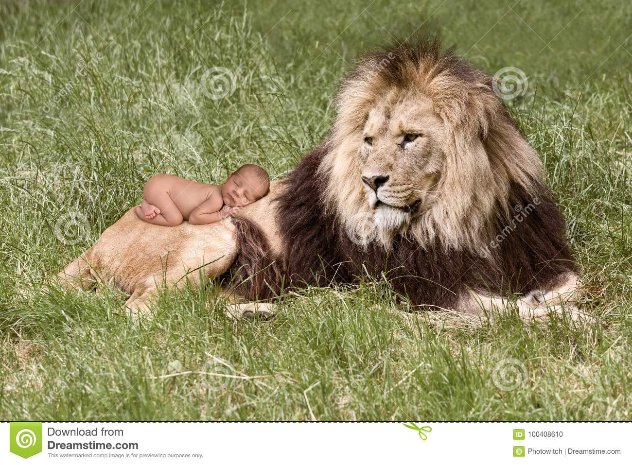 Baby Sleeping On Lion Stock Photo Image Of Photoshop