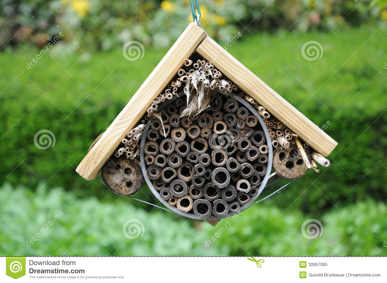 Insect Hotel Stock Image Image Of Bumblebee Larva Green