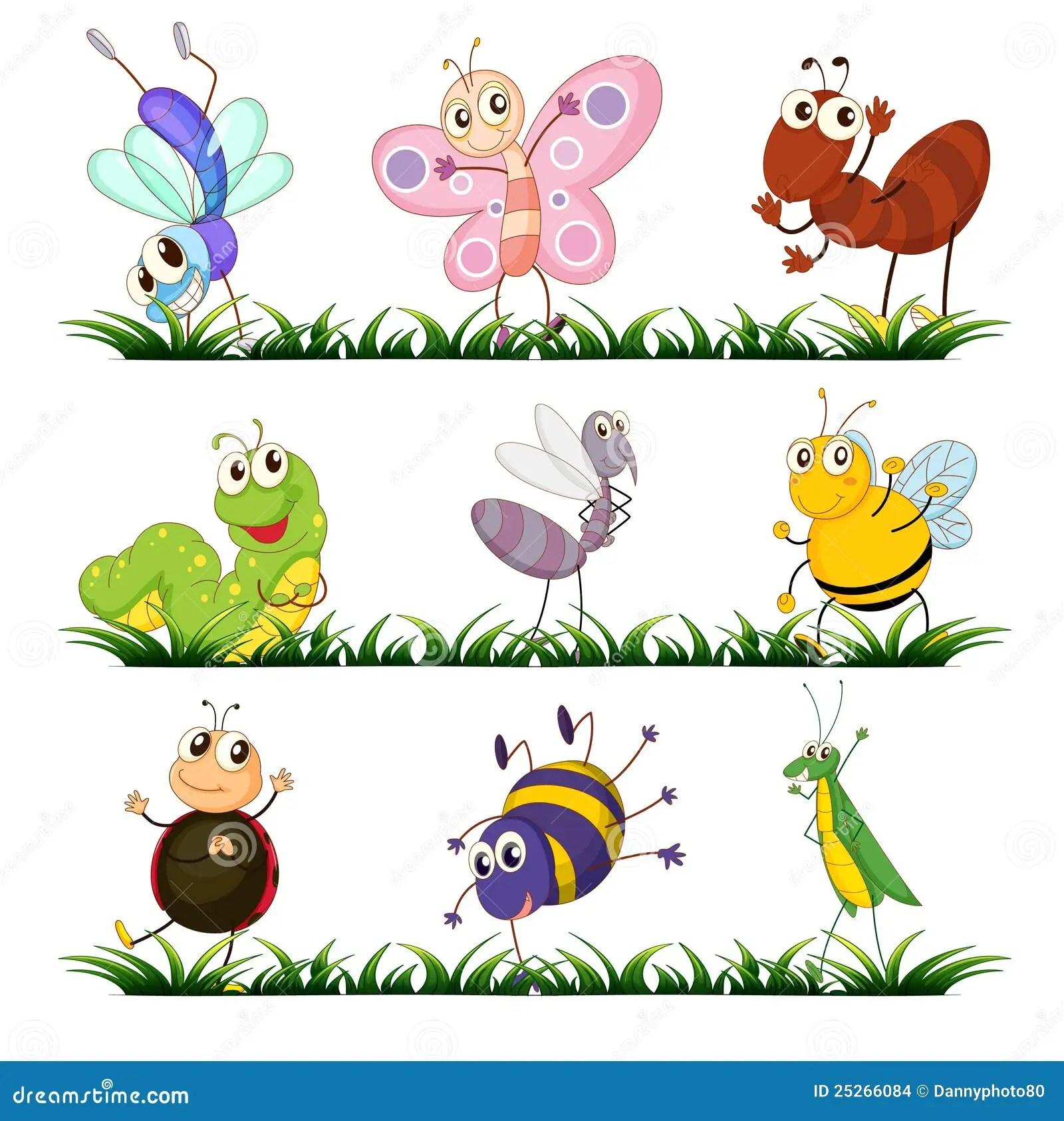 Insecten Stock Illustratie Illustratie Bestaande Uit