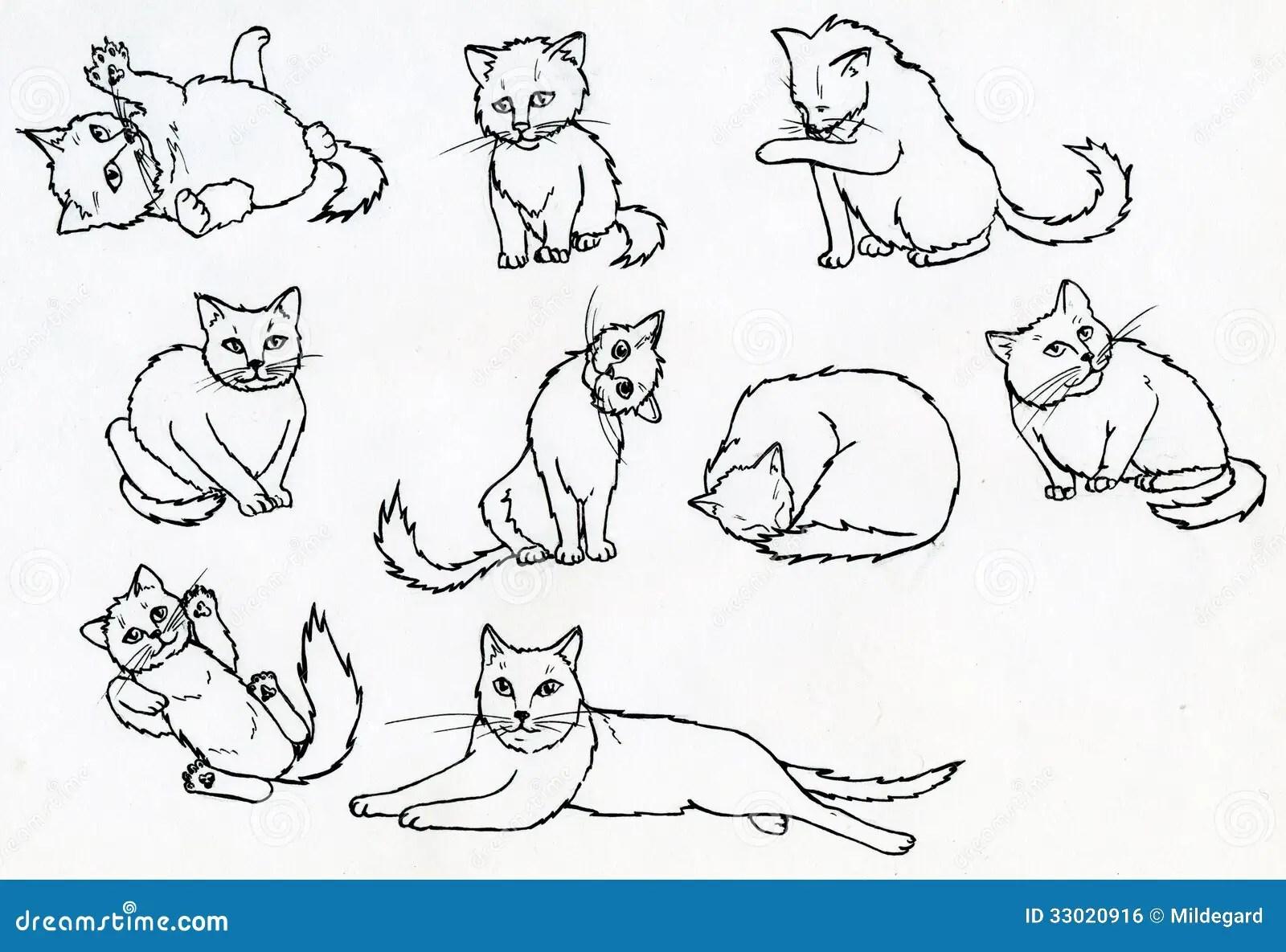 Insieme Dei Gatti Disegnati Inchiostro Illustrazione Di