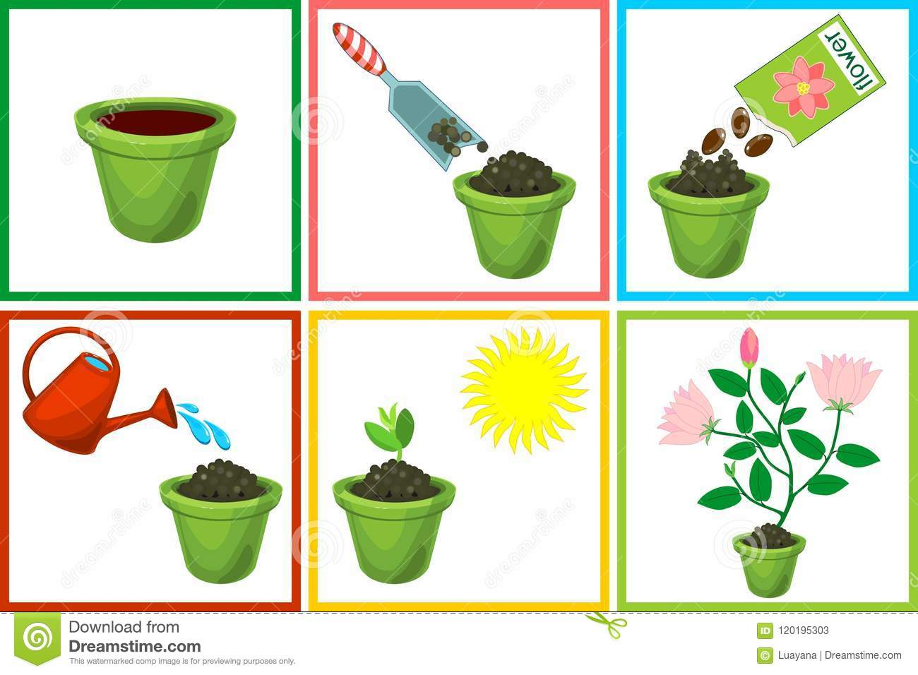 Instructions On How To Plant Flower In Six Steps Step By
