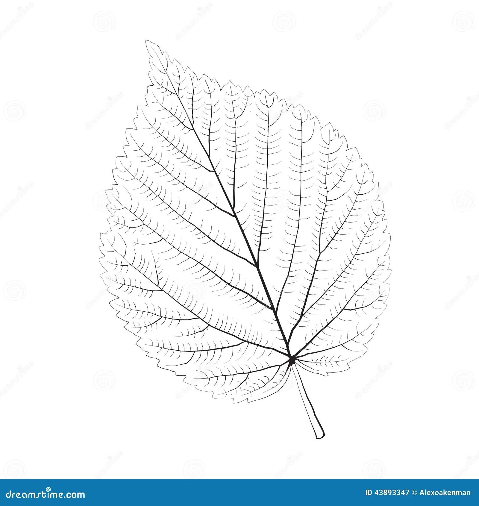 Isolated Vector Monochrome Birch Leaf Stock Vector