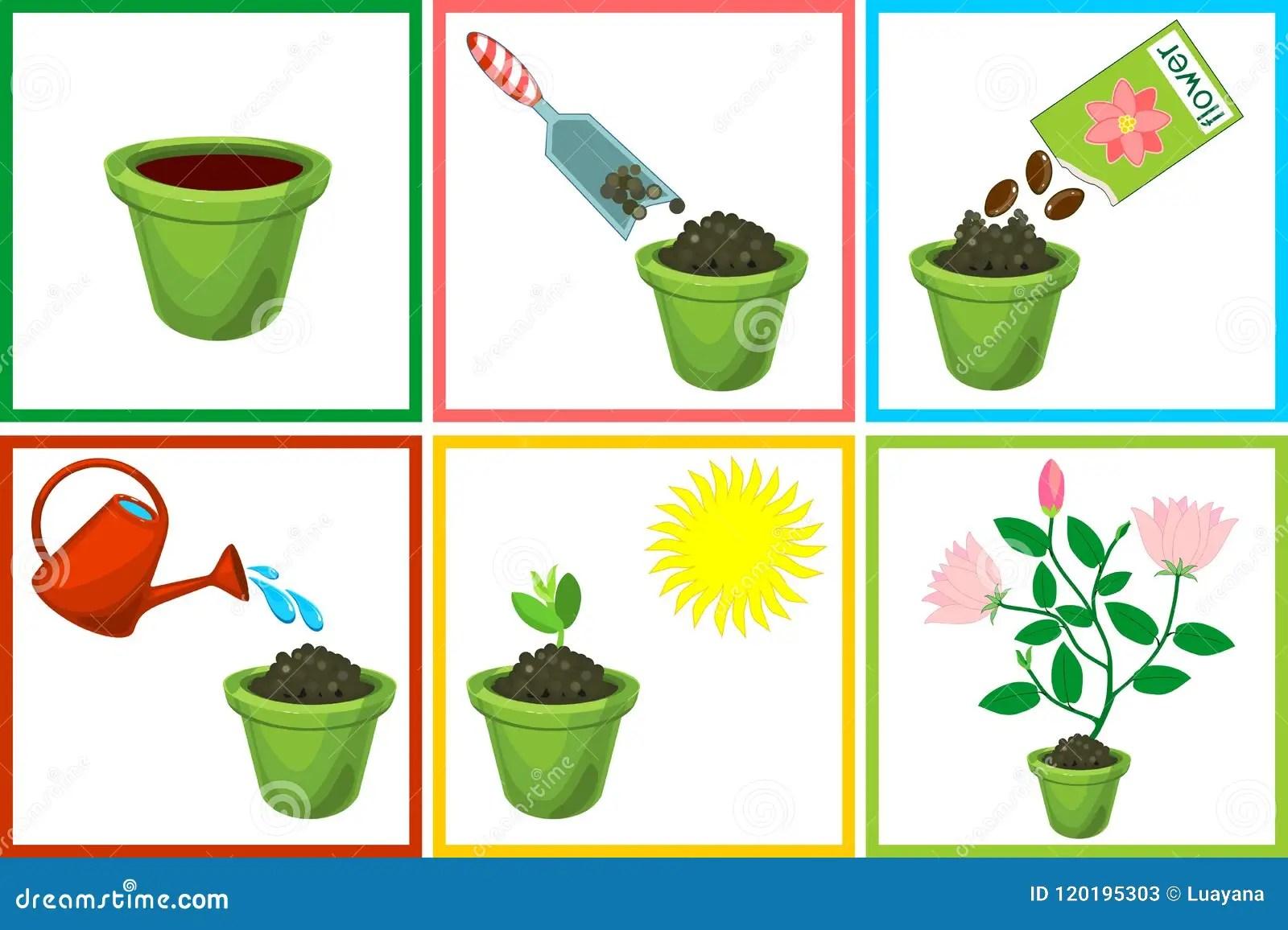 Istruzioni Su Come Piantare Fiore A Sei Punti Per Gradi