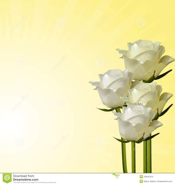 Ivory Roses On A Cream Background Stock Illustration