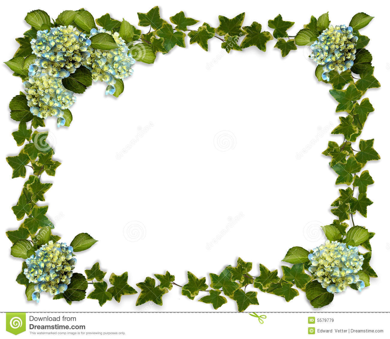 Ivy Border With Hydrangea Flowers Stock Illustration