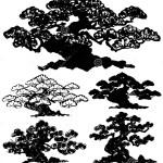 Japanese Pine Tree Illustration 40487230 Megapixl