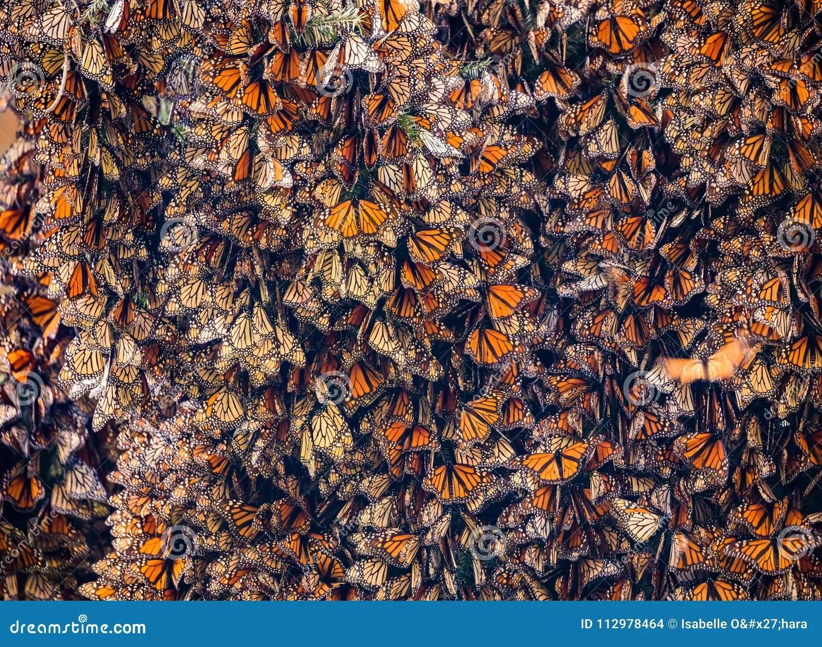Kalaeidoscope Of Monarch Butterflies Danaus Plexippus