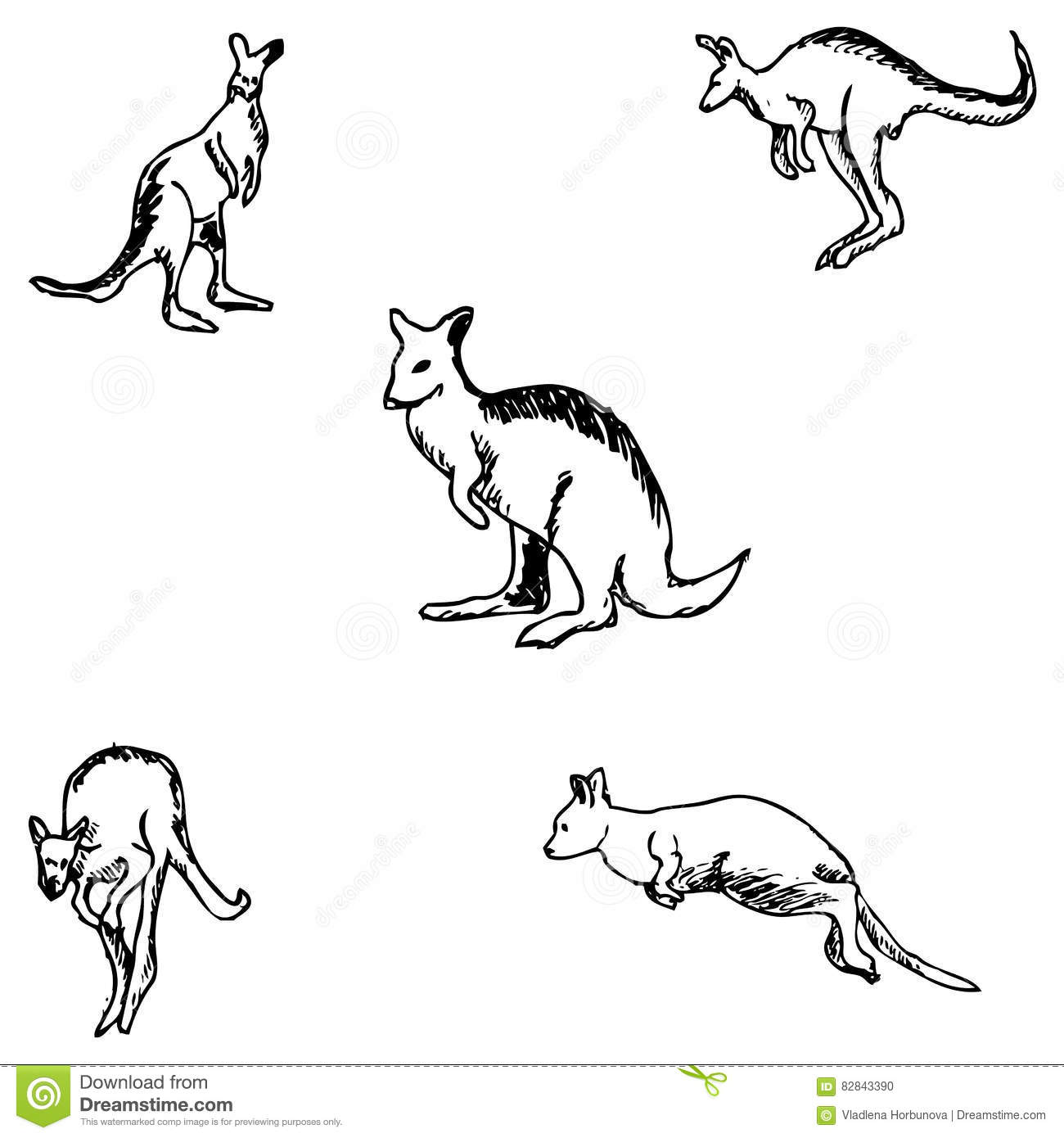 Kangaroo Vector Drawing Vector Illustration