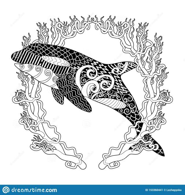 Killer Whale with High Details. Stock Vector - Illustration of
