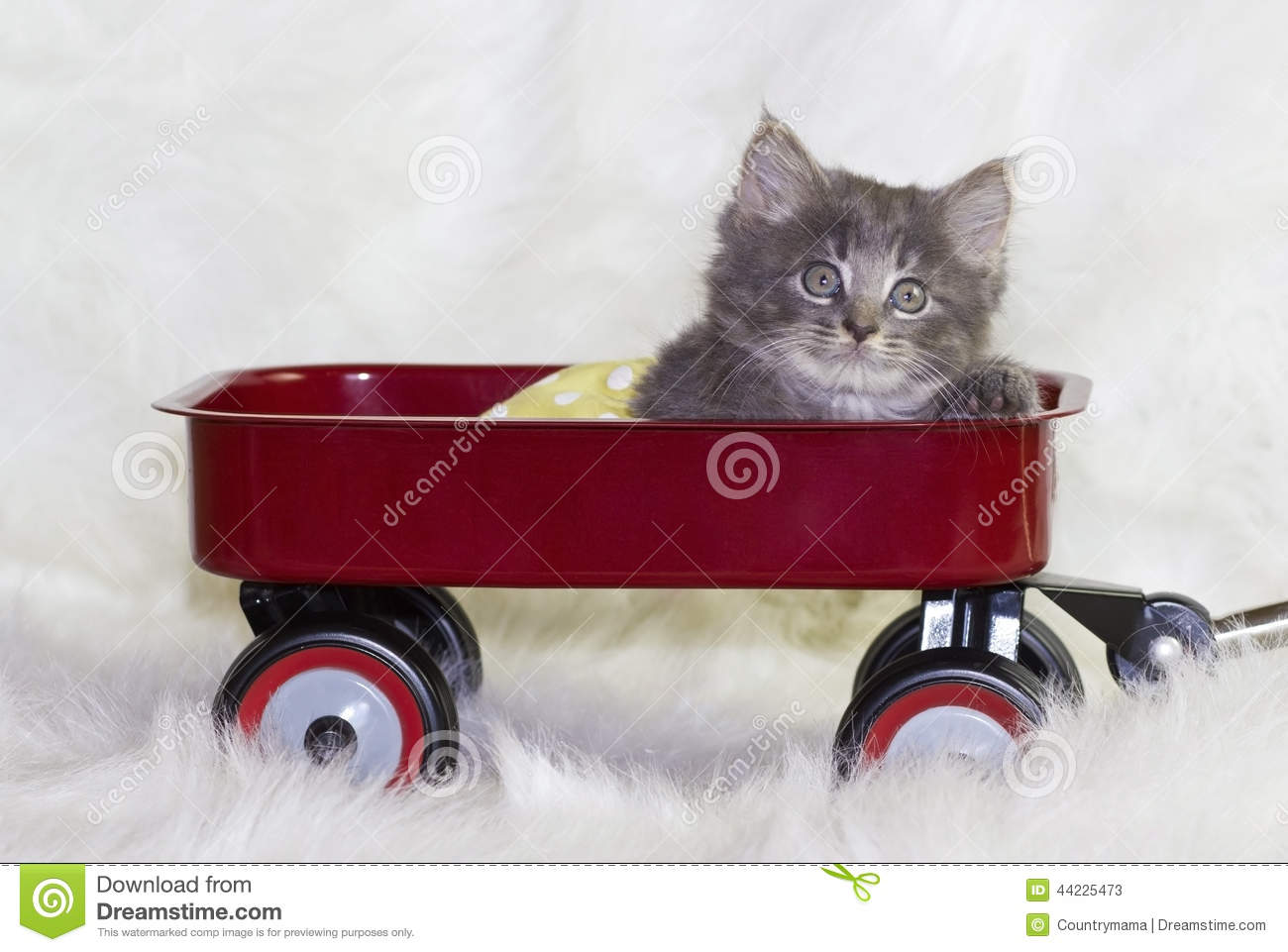 Kitten In A Wagon Stock Photo Image 44225473
