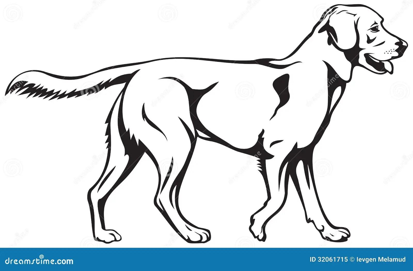 Labrador Retriever Dog Breed Royalty Free Stock Photo