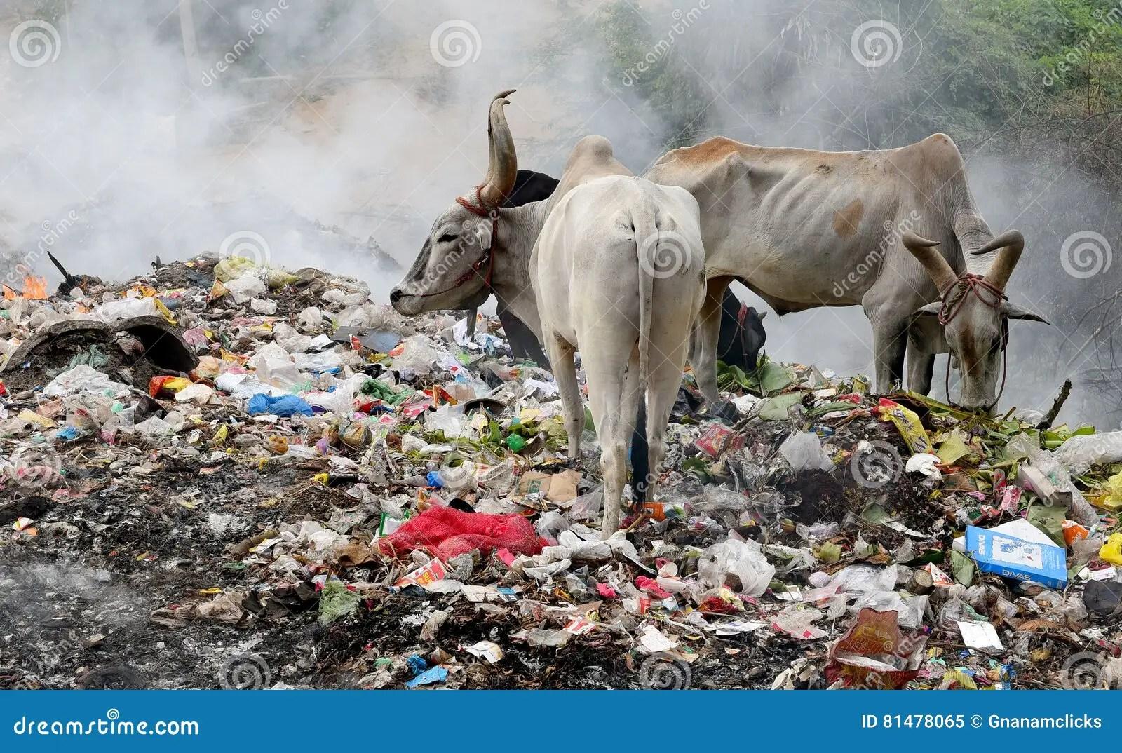 Pollution On Land Worksheet