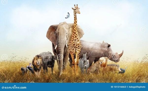 Safari Animals In Africa Composite Stock Image - Image of ...