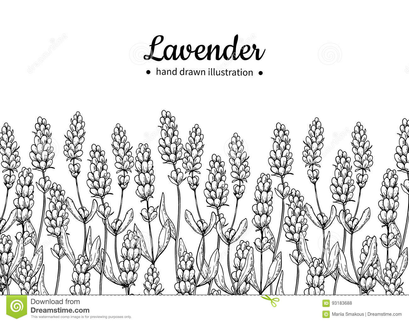 Lavender Vector Drawing Frame Wild Flower And Leaves