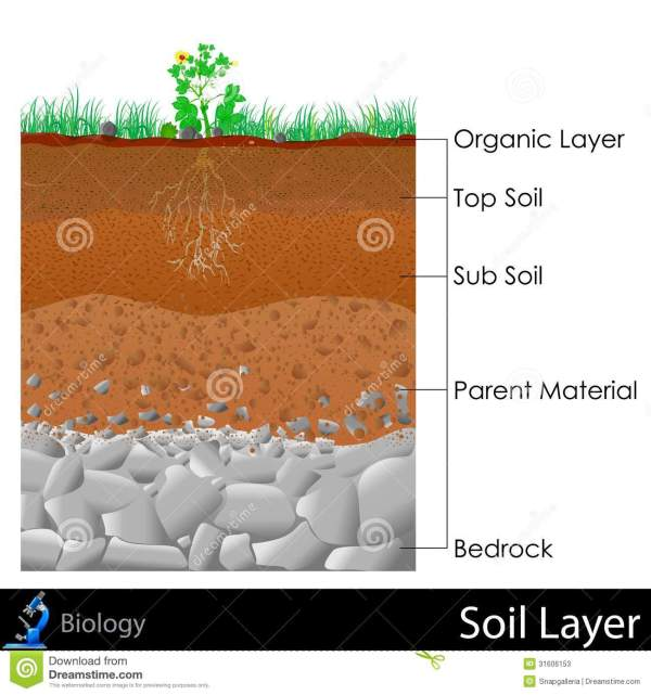 Layer of Soil stock illustration. Image of diagram, root ...