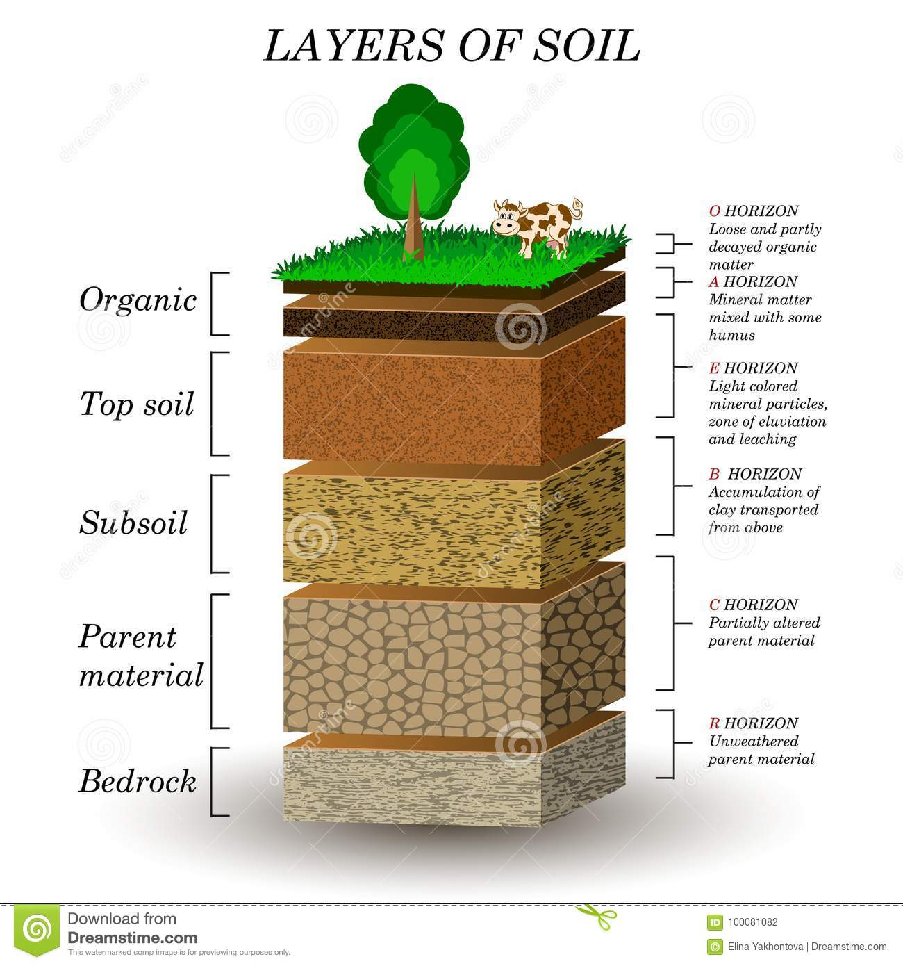 Layers Of Soil Education Diagram Mineral Particles Sand