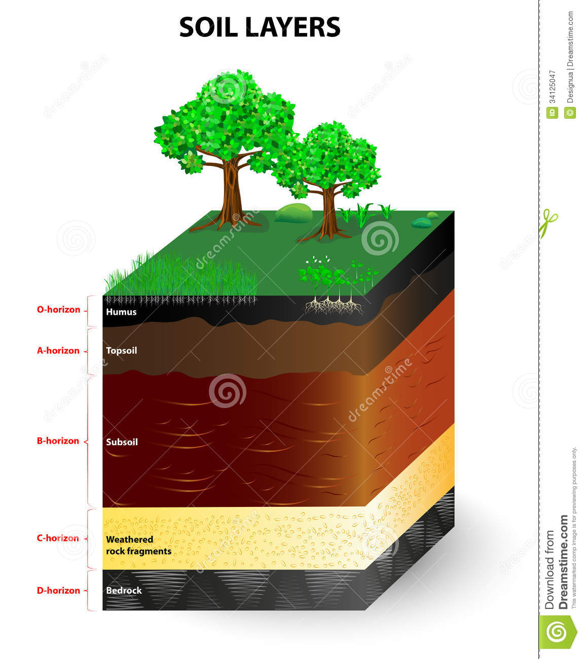 Layers Of A Soil Profile Stock Vector Illustration Of