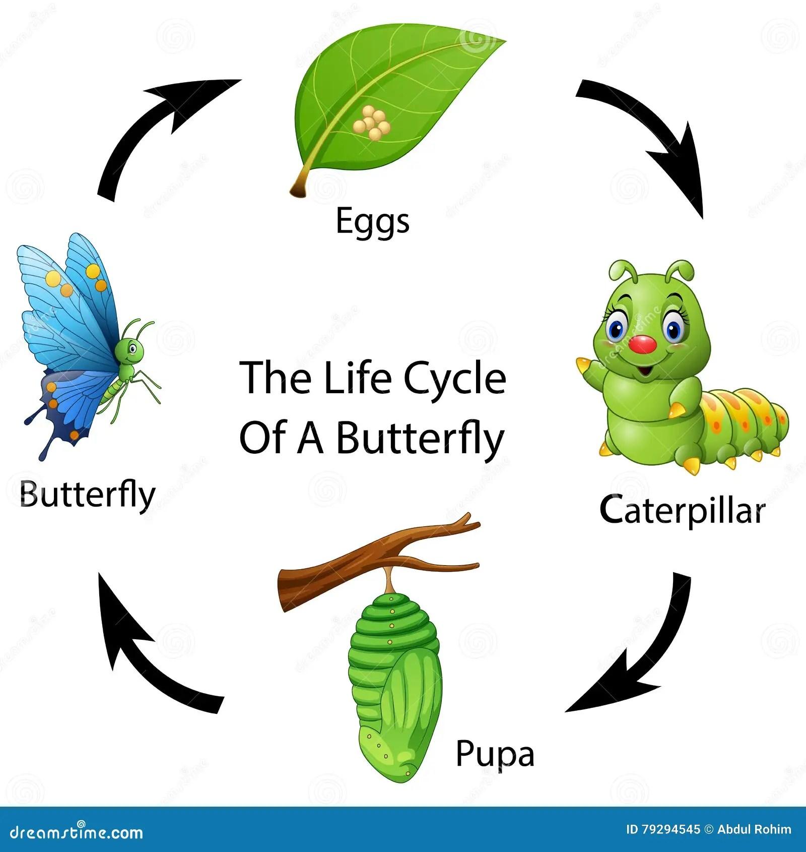 Le Cycle De Vie D Un Papillon Illustration De Vecteur