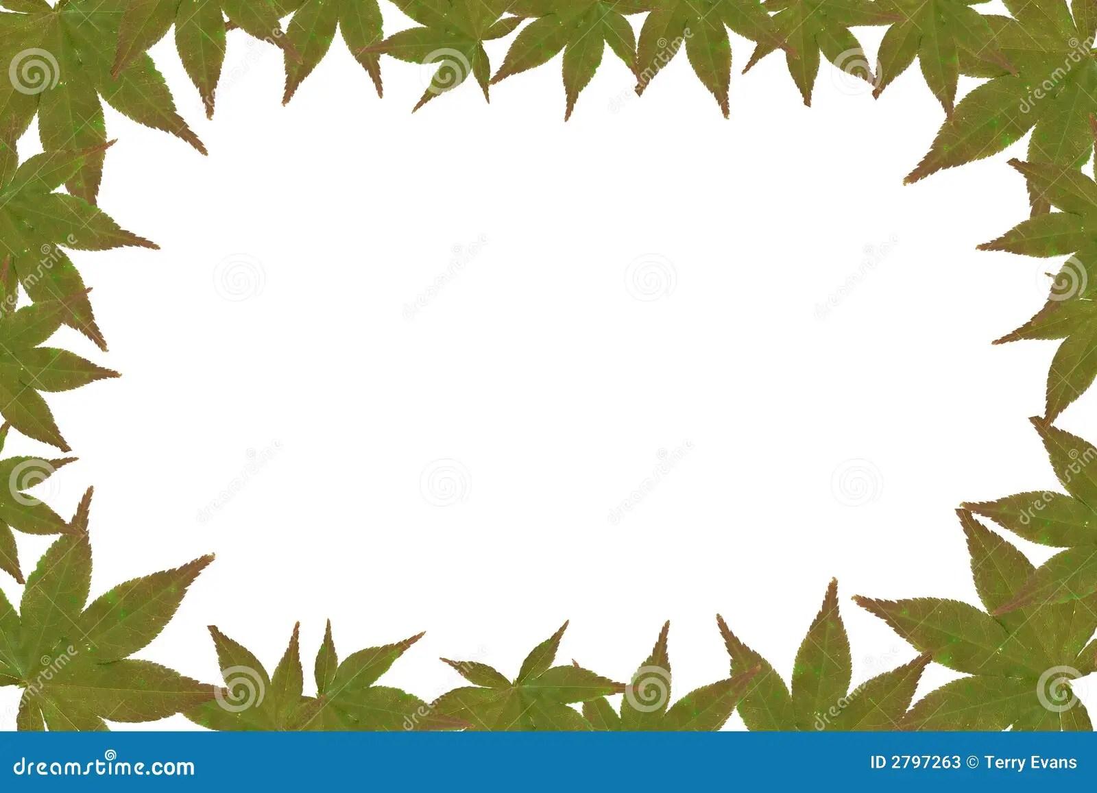 Leaf Frame Stock Image Image Of Nature Wallpaper