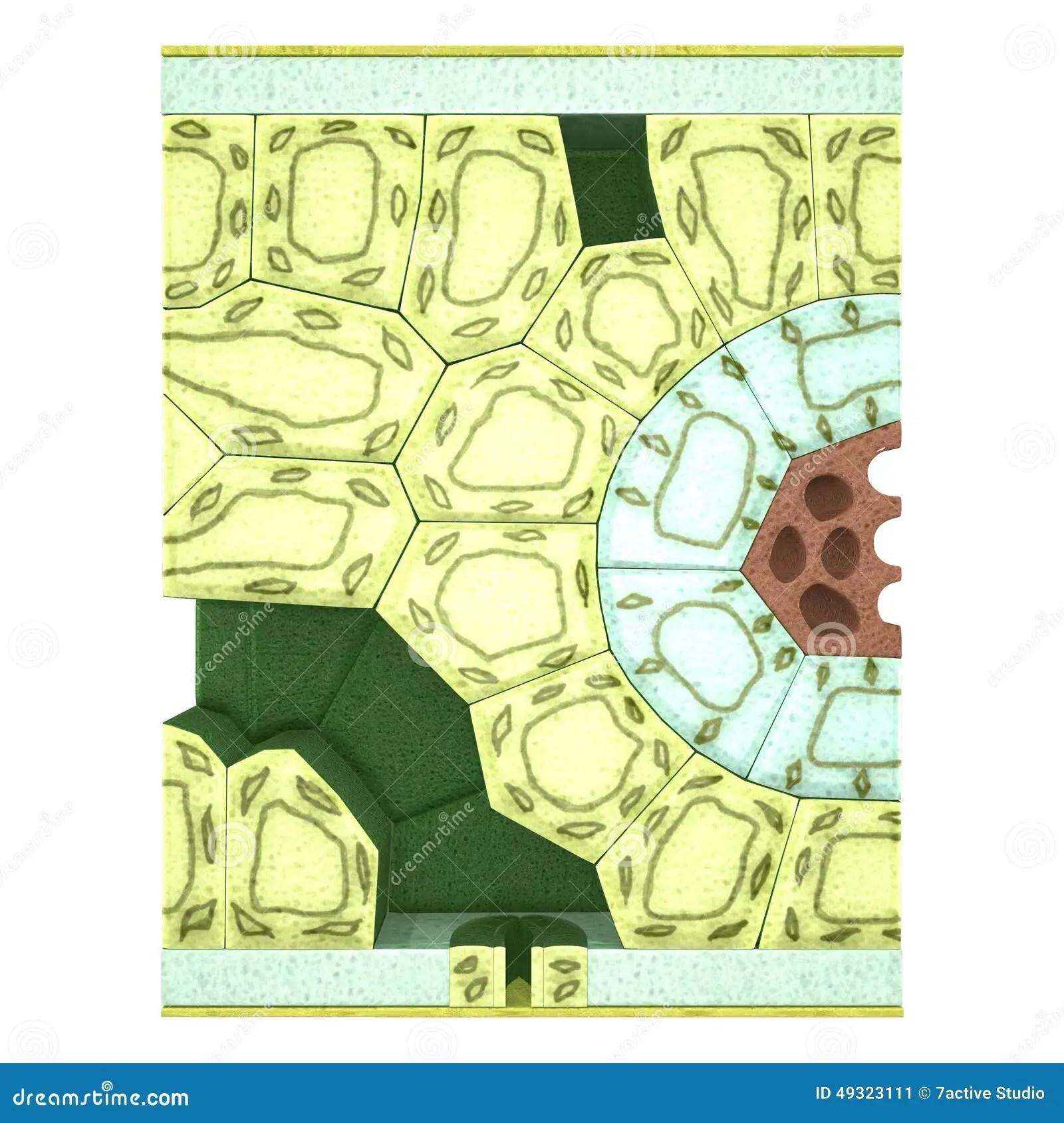 Leaf Section Stock Illustration