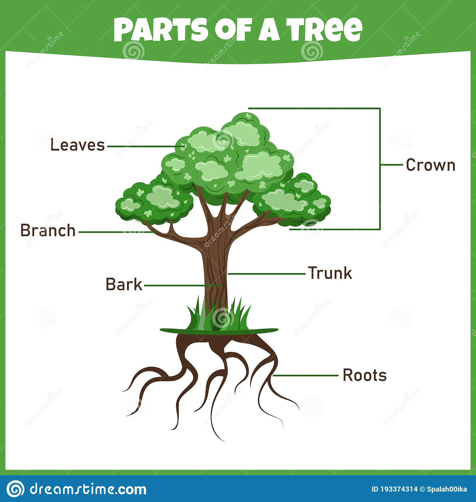 Learning Parts Of A Tree Education Worksheet Stock