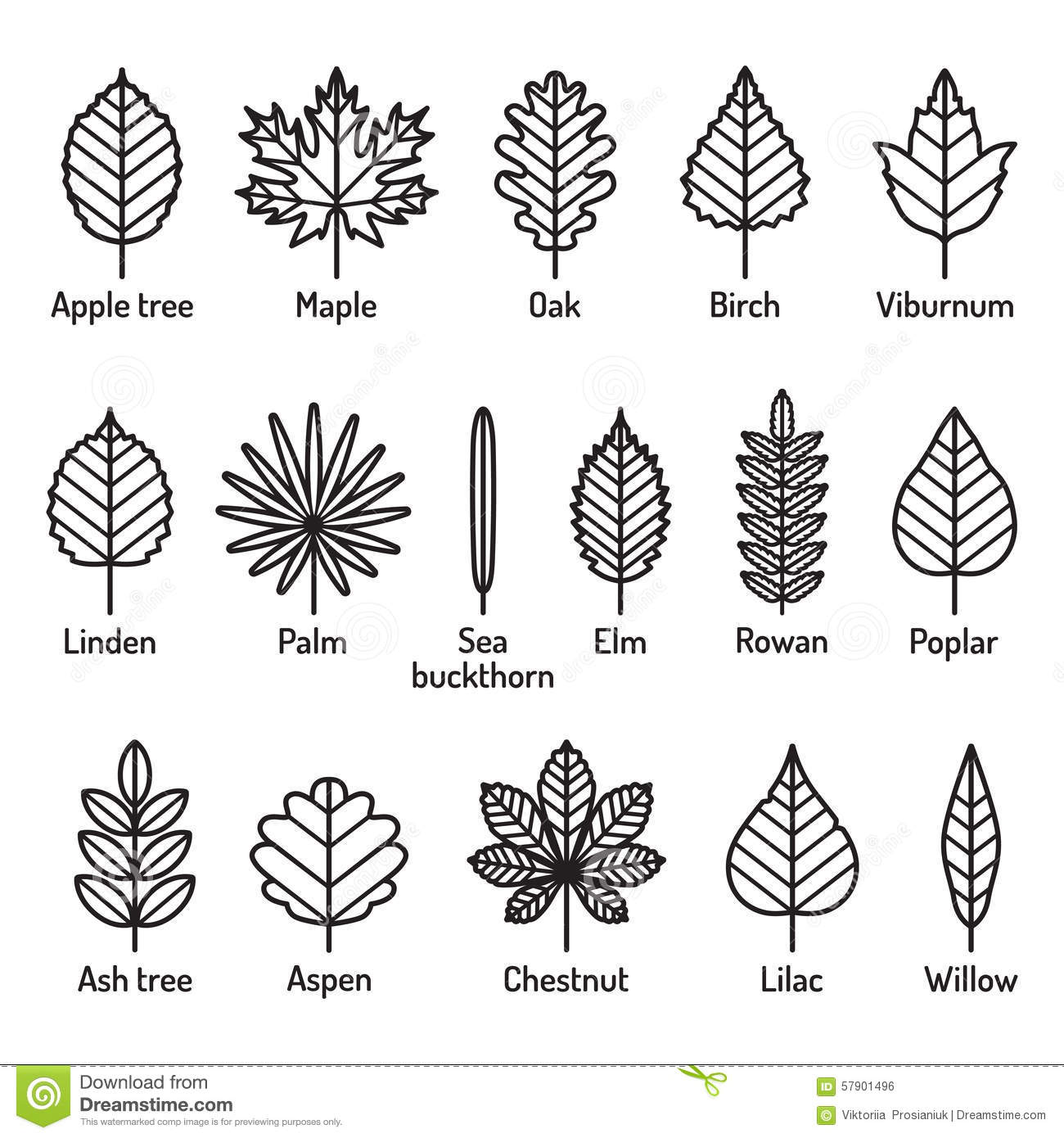 Leaves Types With Names Icons Vector Set Outline Black Icons Stock Vector