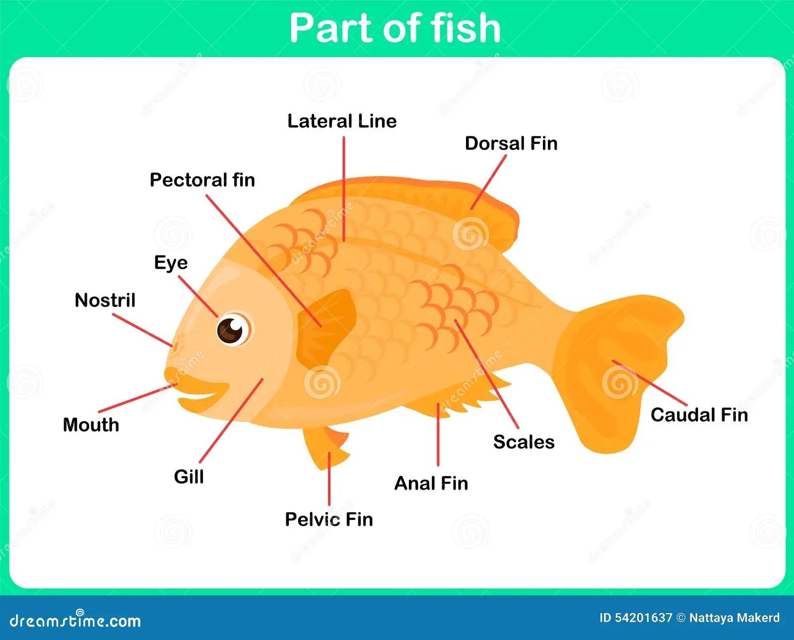 Lehnende Teile Fische Fur Kinder
