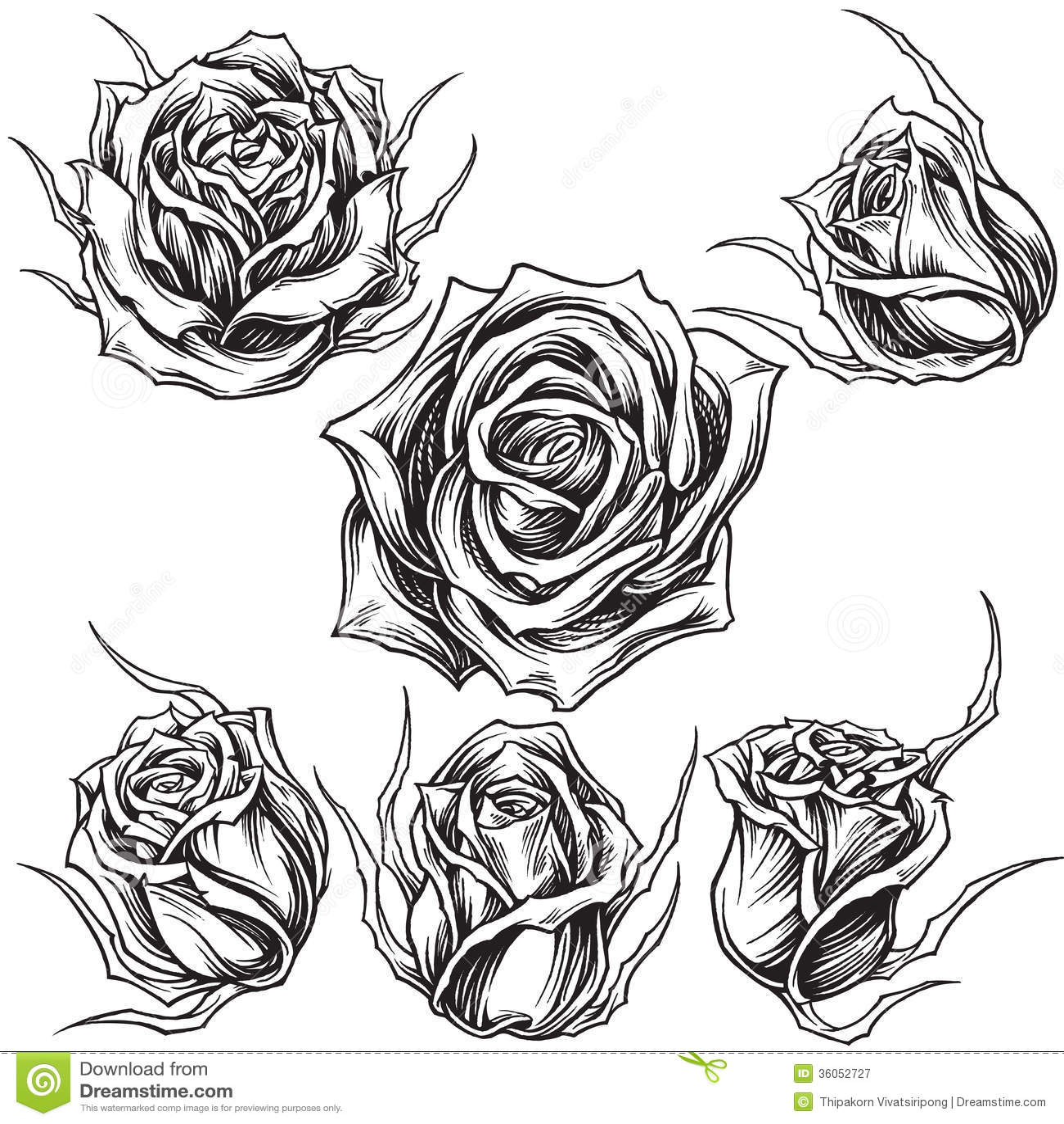 Les Roses Dirigent L Ensemble 01 Illustration De Vecteur