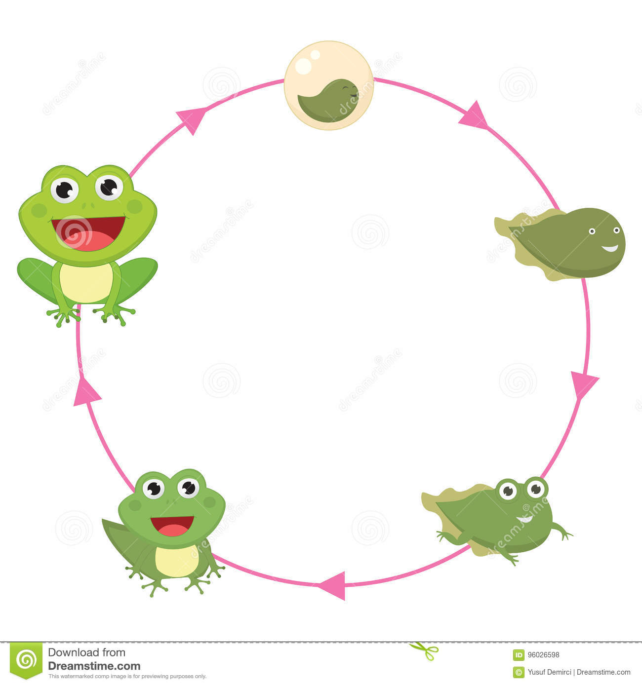The Life Cycle Of Frog Vector Illustration Stock Vector
