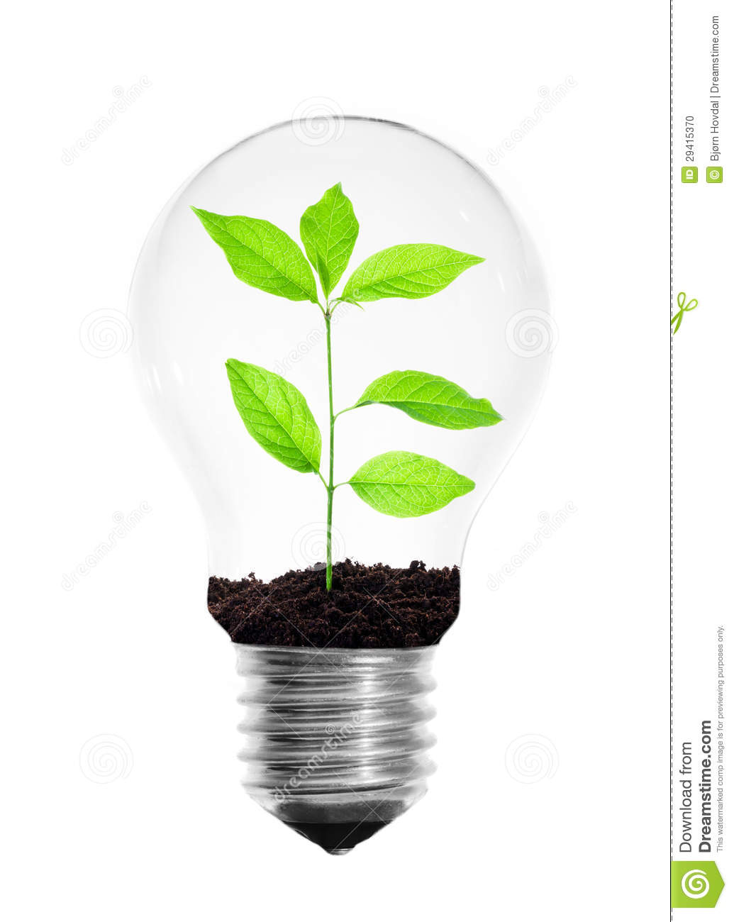 Light Bulb With Plant Stock Photo Image Of Concept Power