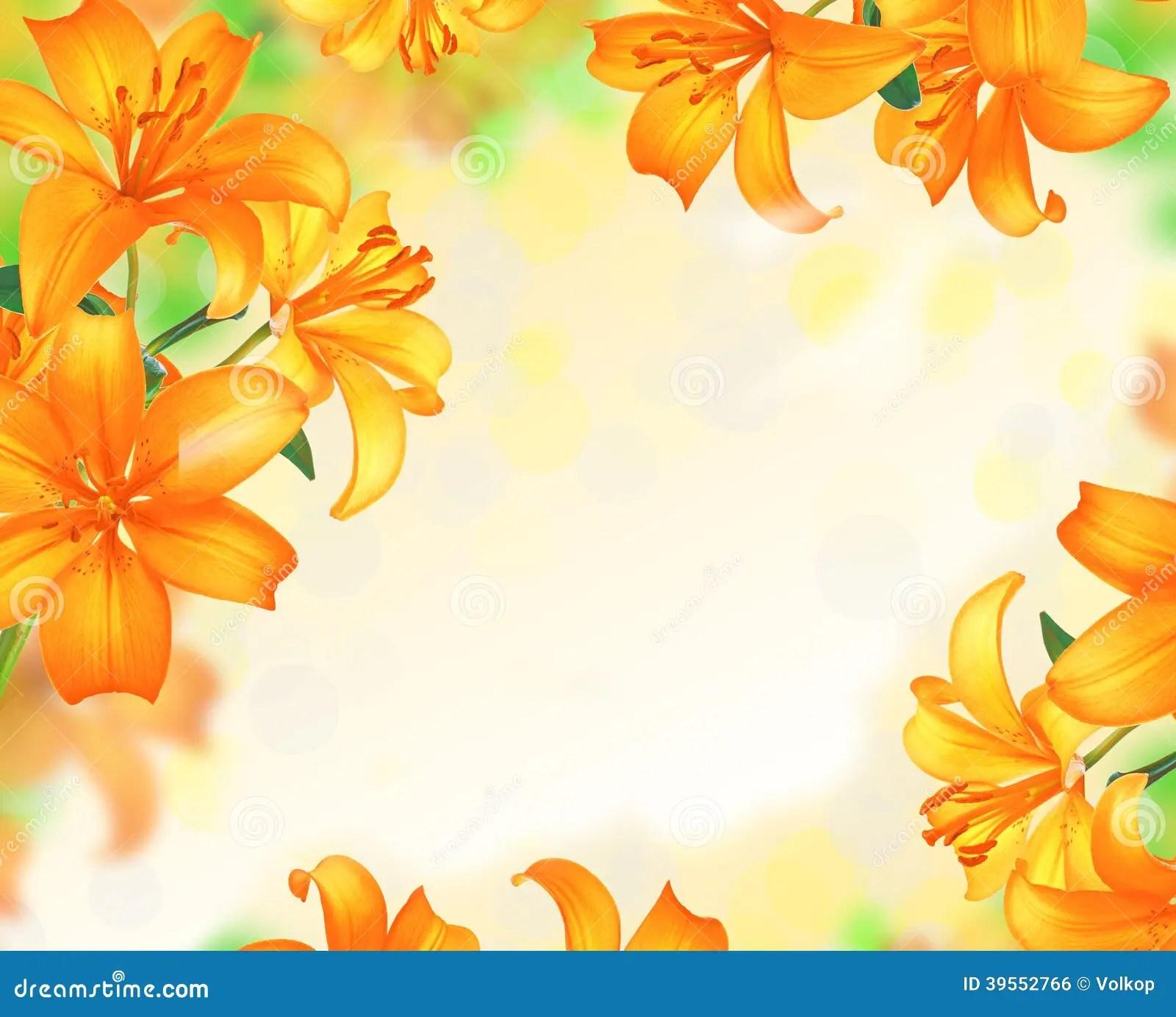 Lily Flowers Gransdesign Arkivfoto Bild Av Boris Blomma