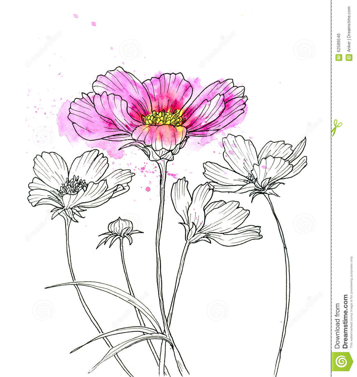Line Ink Drawing Of Cosmos Flower Stock Illustration